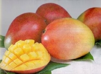 "Mangoes - ""Sealed Jars of Honey """